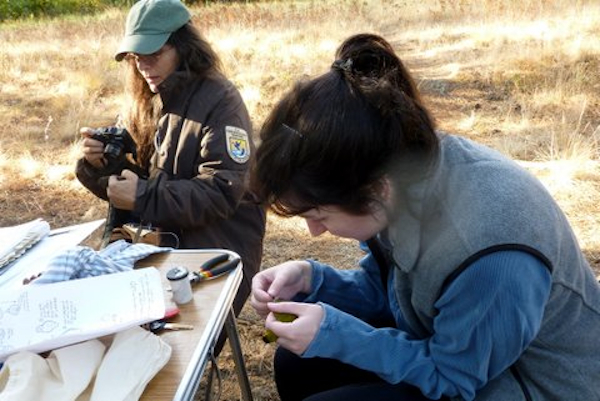 research bird banding